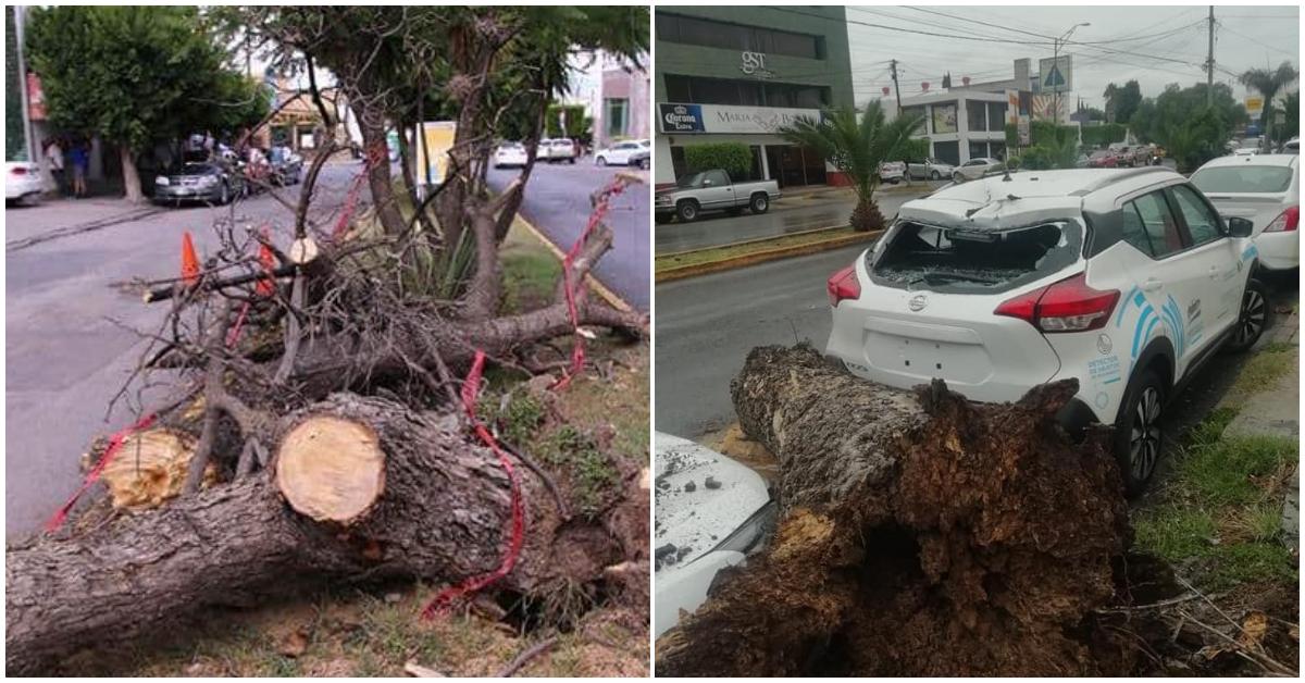árboles caídos