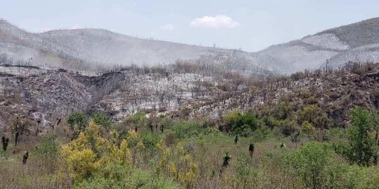 incendios en SLP