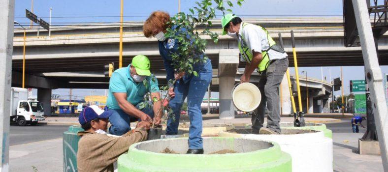 campaña de reforestación