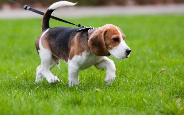 multas a dueños de perros