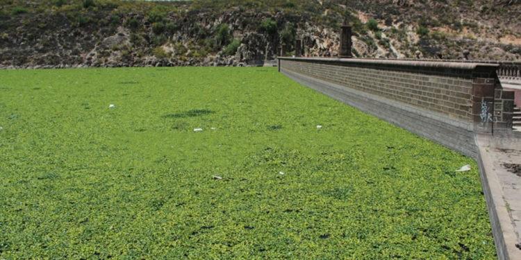 presa San José